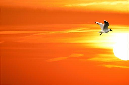 Gull, Sun, Bird, Fly, Wings, Feather, Wildlife, Beak