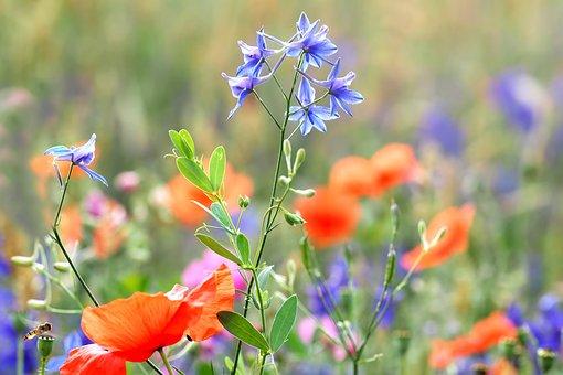 Rain Field, Larkspur, Wild Flowers