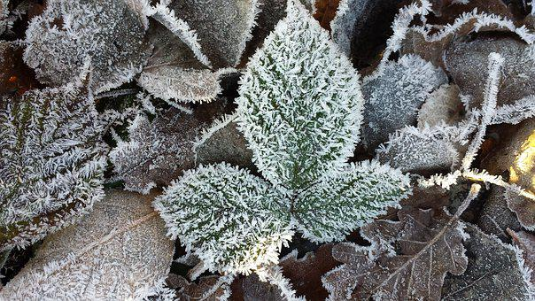 Frost, Hoarfrost, Leaf, Frozen, Freezing Temperatures