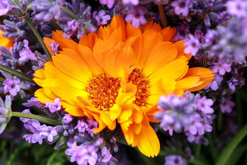 Bunch Of Flowers, Marigold, Lavender, Yellow, Purple