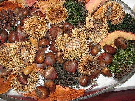 Maroni, Chestnut, Moss, Autumn
