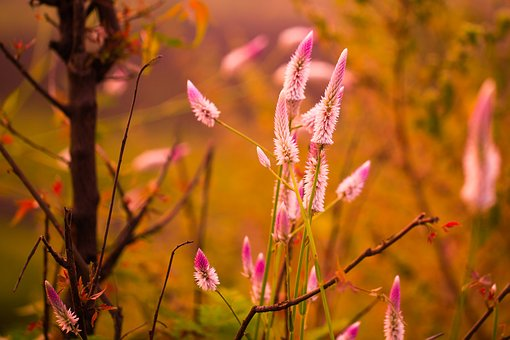 Long Flower, Blossom, Pink, Plant, Nature, Natural