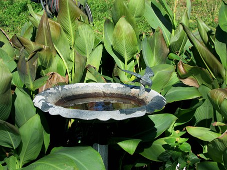 Birdbath, Plants, Water, Nature, Green, Garden
