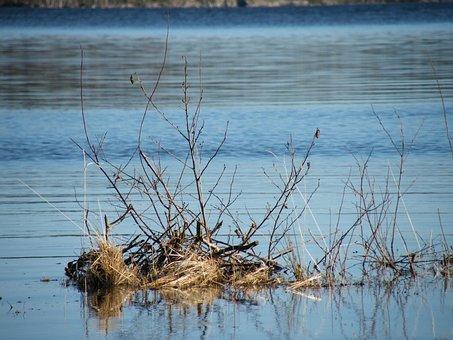 Twig In Water, Lake, Norwegian Nature, Norway