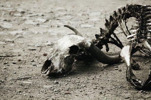 Bones, Fossils, Decay, Decomposition, Skeleton, Old