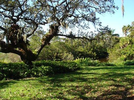 Sarasota Florida, River, Tree, Organic, Agriculture