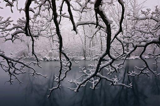 Winter, Beauty, Snow, Seasons, Trees, Beautiful