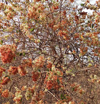 Wild Flower, Blossom, Profusion, Forest, Western Ghats