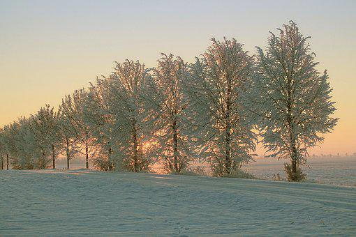Winter, Morning Sun, Snow, Cold, Winter Impressions