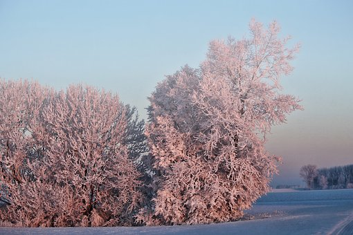 Winter, Morning Sun, Trees, Snow, Cold Ice, Fog, Mood