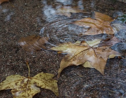 Autumn, Water, Foliage, Tree, November