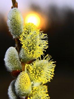 Verba, Sun, Spring, Nature, Forest, Mood, Landscape
