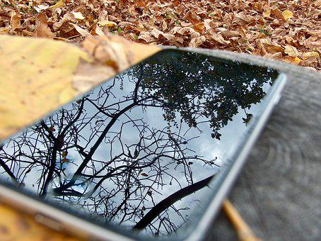 Phone, Autumn, Nature, Foliage, Forest