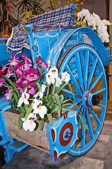 Orchids, Dendrobium, Flora, Flower, Blossom, Bloom