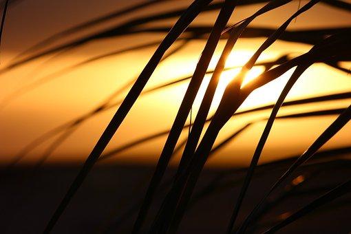 Cape Verde, Sunset, Palm Tree