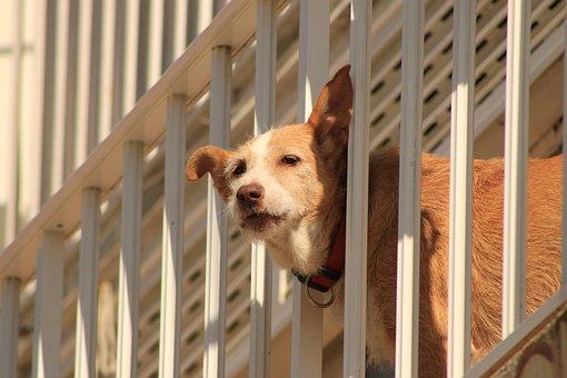 Dog, Peek, Communicate, Balcony, Pet, Guard, Alert