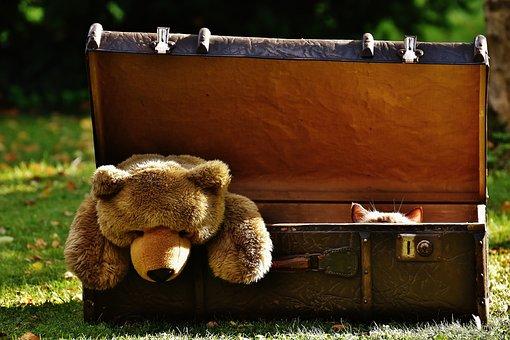 Luggage, Antique, Teddy, Cat, Hidden, Soft Toy