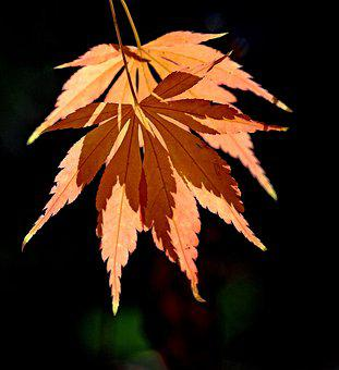 Leaf, Autumn, Fall, Shadow, Leaves, Ambiguity