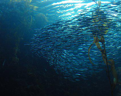 Fish, School, Swirl, Underwater, Ocean, Sea, Nature