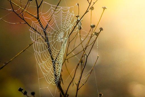 Cobweb, Dew, Nature, Moist, Autumn, Network, Morgentau