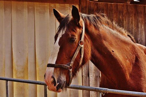 Shire Horse, Horse, Big Horse, Ride, Reitstall