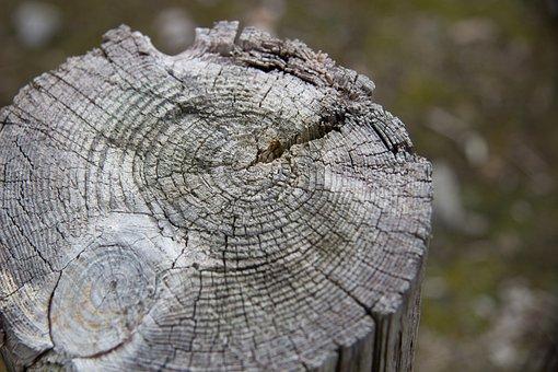 Wood, Wood Background, Stump, Tree Stump, Tree, Forest