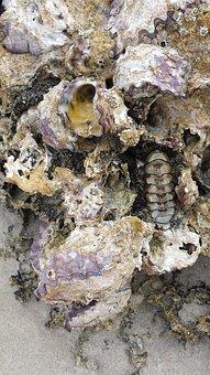 Fossil, Rock, Prehistoric, Ancient, Paleontology