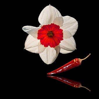Flower, Summer, Bloom, Summer Plant, Summer Flower