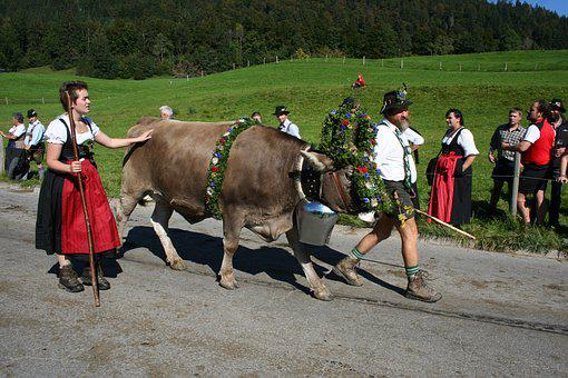 Cow, Wreath Beef, Allgäu, Bavaria, Almabtrieb, Customs