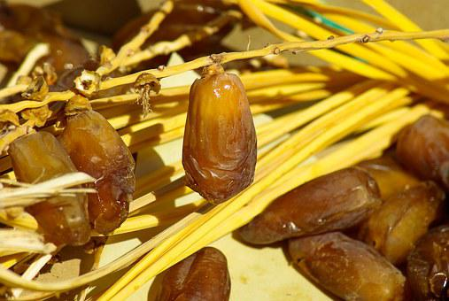 Dates, Dried Fruit, Date Palm