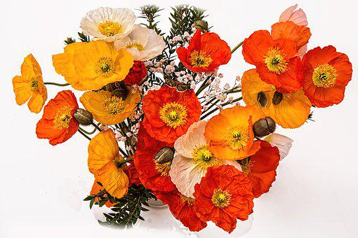 Poppies, Cheerful, Happy, Bright, Colorful, Friendly