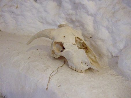 Skull, Goat, Andalusia, Granada, Spain, Cave