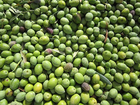 Olives, Olives Harvested, Fresh Olives, Green Olives