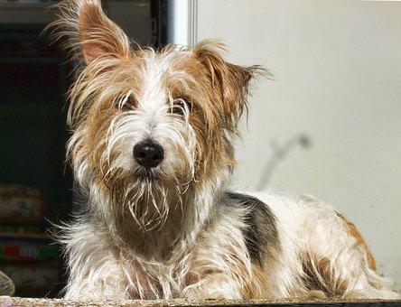Westie, Terrier, Dog, Pedigree, Happy, Nobody, Green