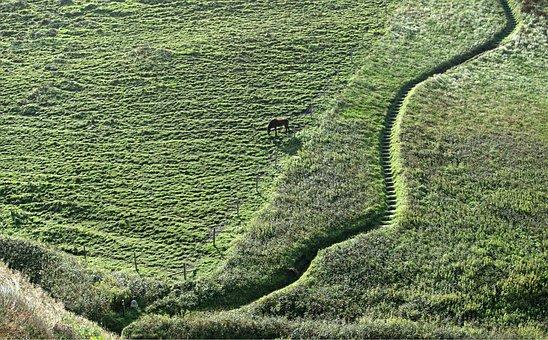 Path, Steps, Hill, Hillside, Horse