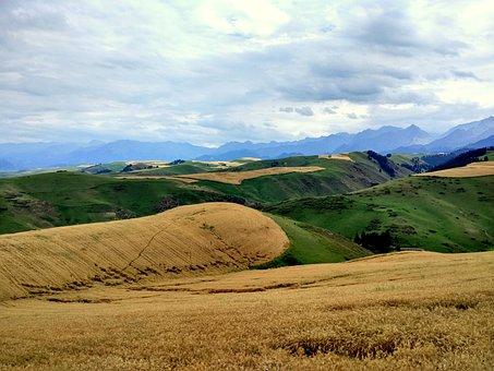 Wheat, Dark Clouds, Rain, Hillside, Grassland