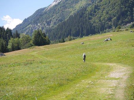 Path, Meadow, Landscape, Nature, Green, Grass