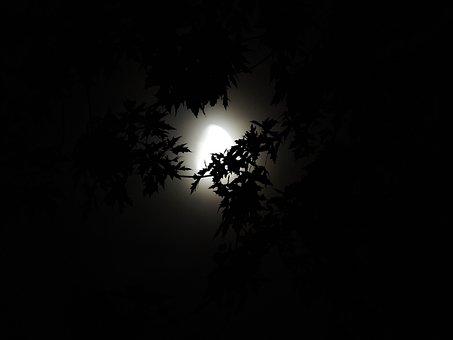 Moonlight Through Trees, Moonlight, Halloween, Season