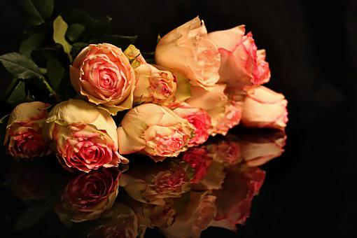 Reflections, Roses, Flowers, Mirror, Pink, Yellow
