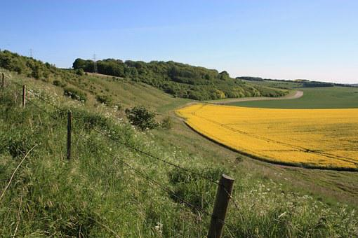Wiltshire, Down Land, Rape, Oilseed, Agricultural