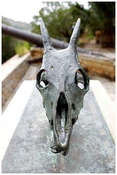 Skeleton, Skull And Crossbones, Skull, Bone, Trophy