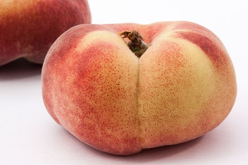 Vineyard Peach, Rose Greenhouse, Rosaceae