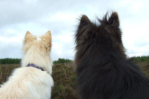 Dogs, White Fur, Black Fur, Back View, Friends, Pets