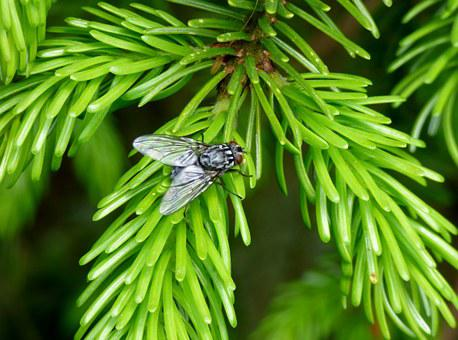 Fly, Nature, Tree, Bug