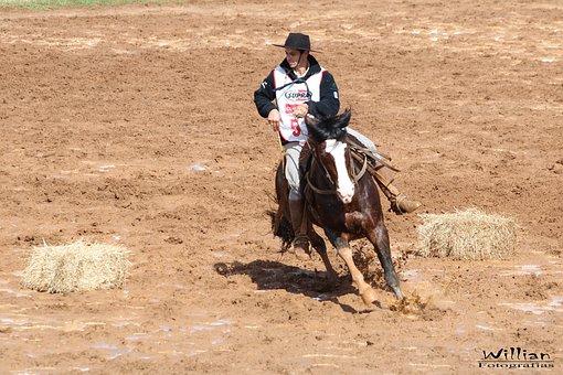 Horse, Knight, Animal, Haras, Great