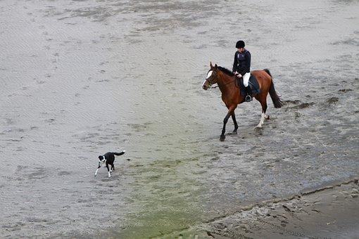 Rider, Beach, Horse, Border Collie, Canine, Dog, Pet