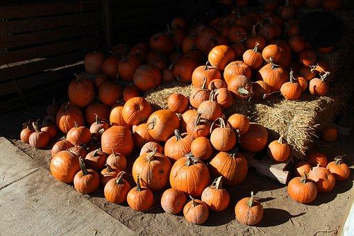 Pumpkins, Pile, Fall, Autumn, Crop, Harvest, Farm