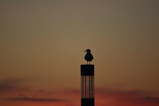 Seagull, Sunset, Outline, Coast, Mood, Sky, Evening