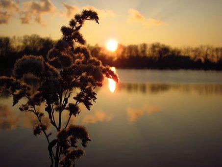 Sunset, Sun, Evening, Plant, Cotton, Lake, Water