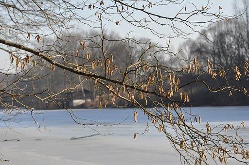 Winter, Lake, Ice, Plant, Tree, Water, Frozen Lake
